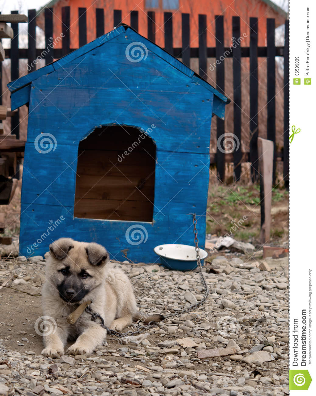 Royalty Free Stock Images Dog House