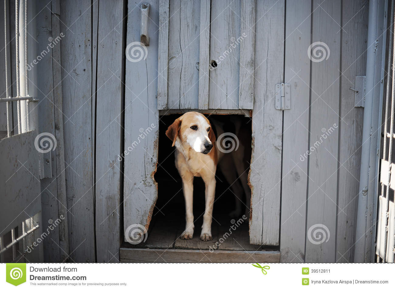 Dog in the doghouse