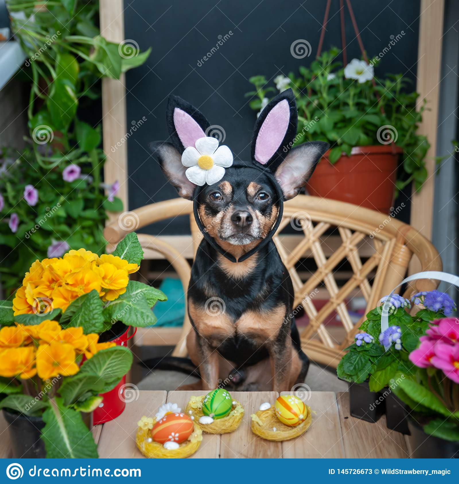 Dog dressed as an Easter bunny in a hat and scarf surrounded by flowers, the theme of spring and Easter