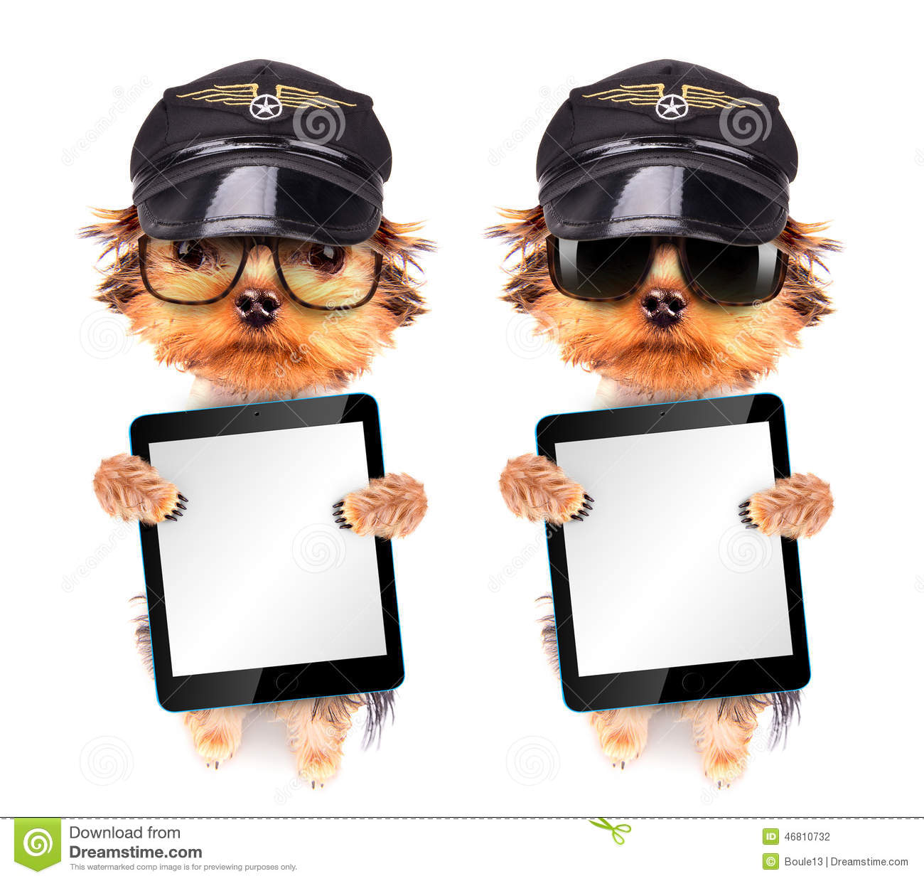 Dog dressed as pilot with tablet pc
