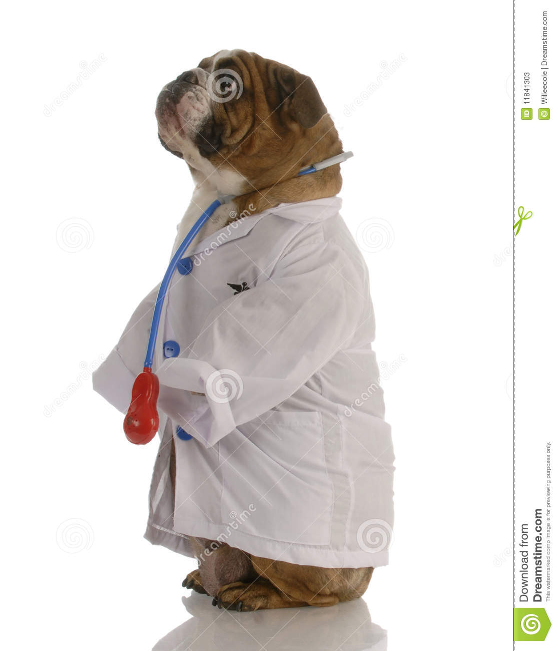Dog Dressed Up As A Doctor Stock Photos - Image: 11841303