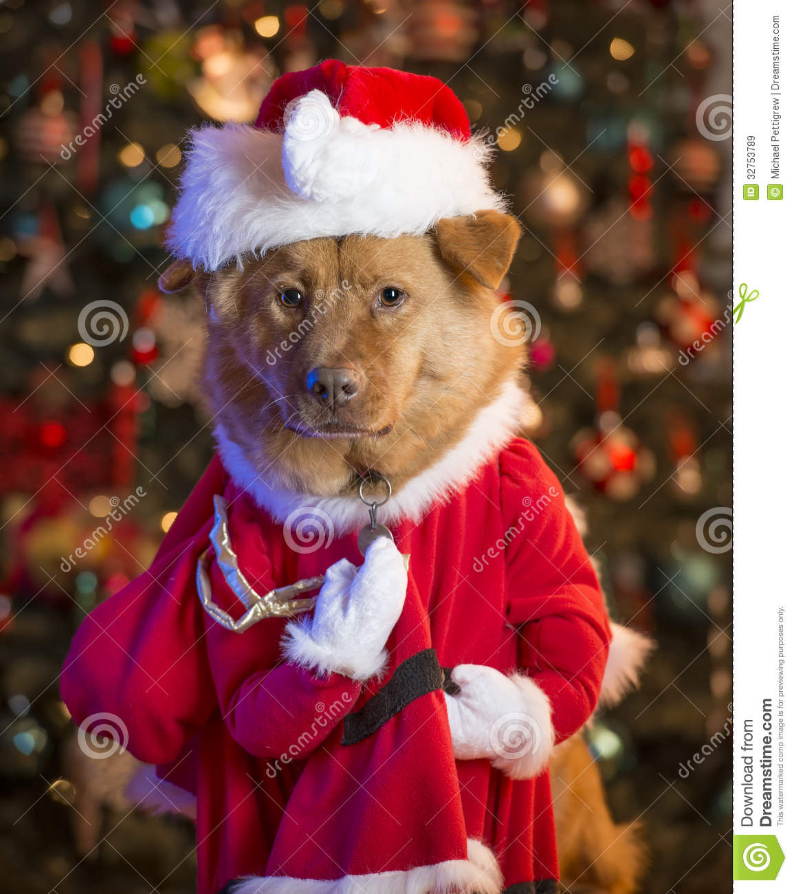Dog Dressed Up As Santa Claus Stock Image Image Of