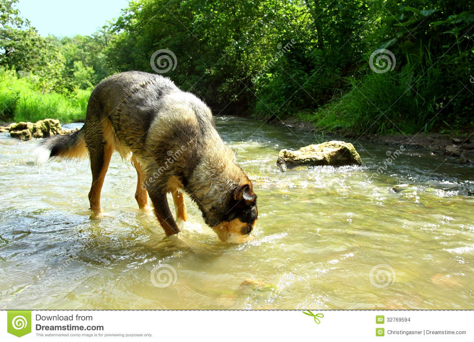 Pets German Stream