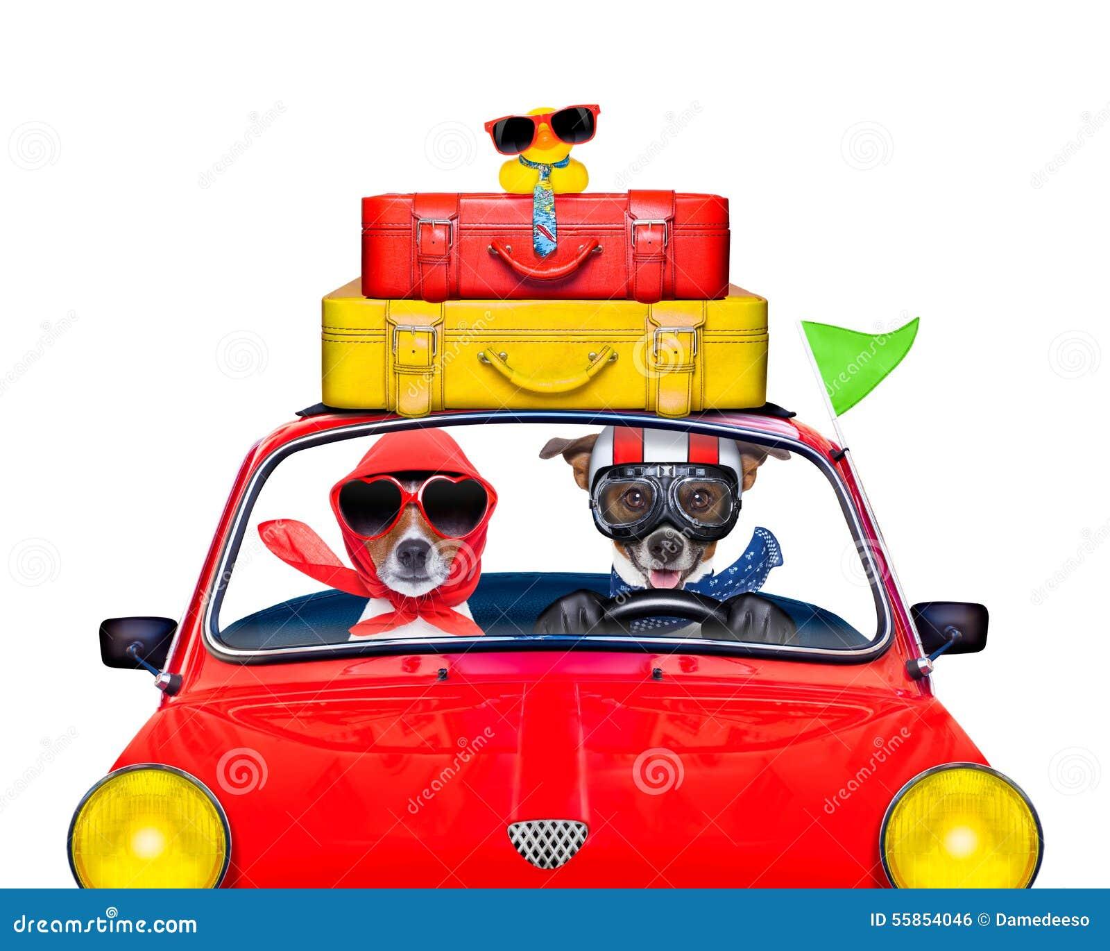 dog driving a car stock photo image 55854046 bubble gum clip art images bubble gum clip art to color