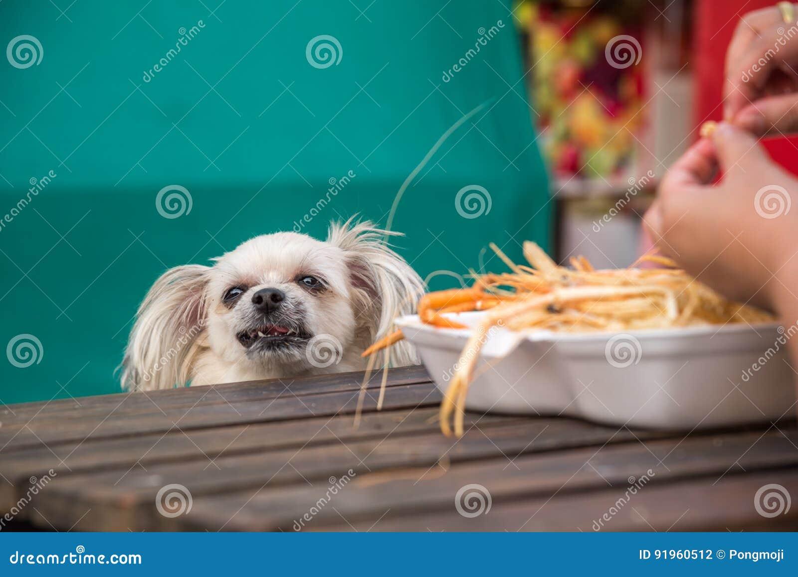 Dog Eat A Prawn Fried Shrimp Salt Feed Pet Owner Stock Photo Image