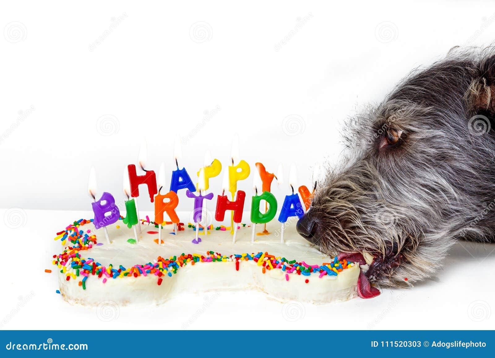 Dog Eating Bone Shaped Birthday Cake