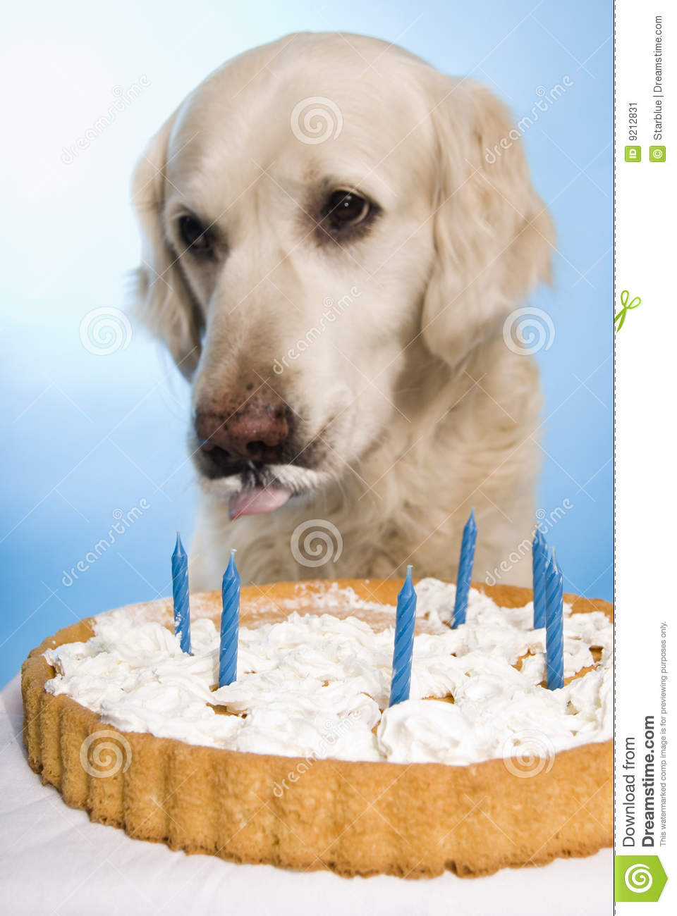 Dog Eating A Cake Stock Image Image Of Celebrating