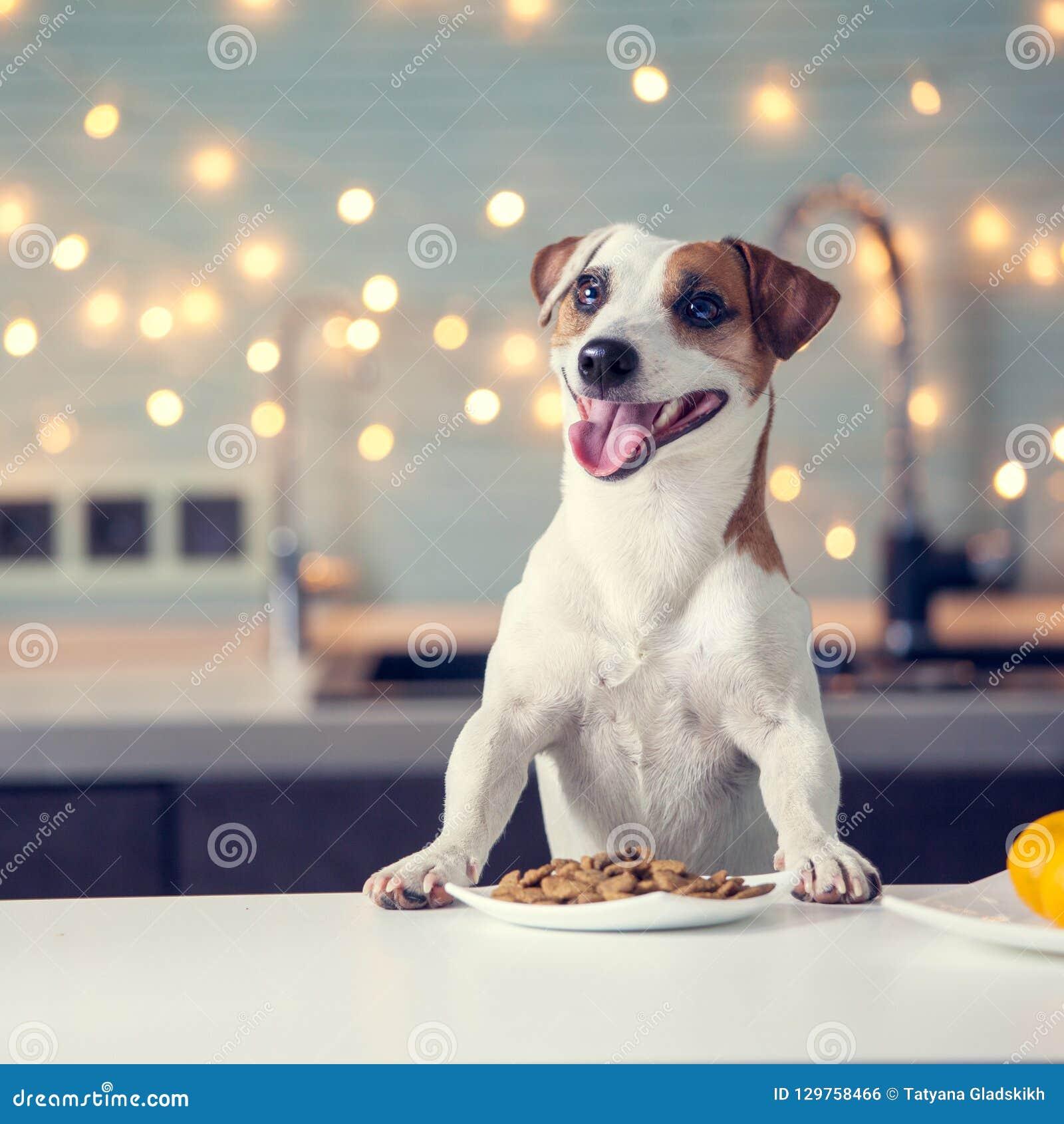 Dog eating food at home