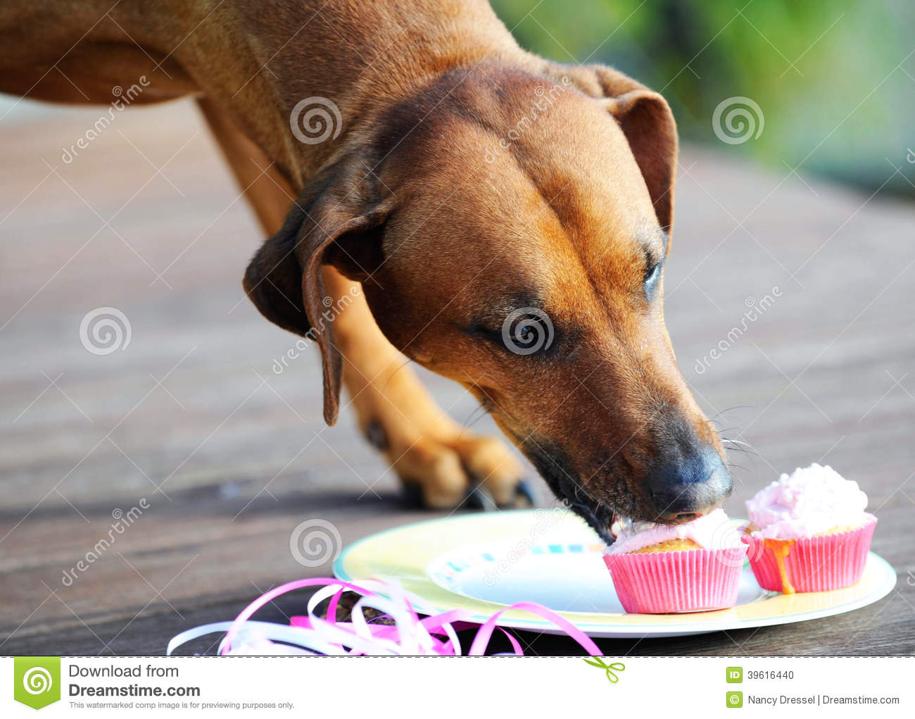 Dog Eating Muffins Stock Photo Image Of Funny Garden
