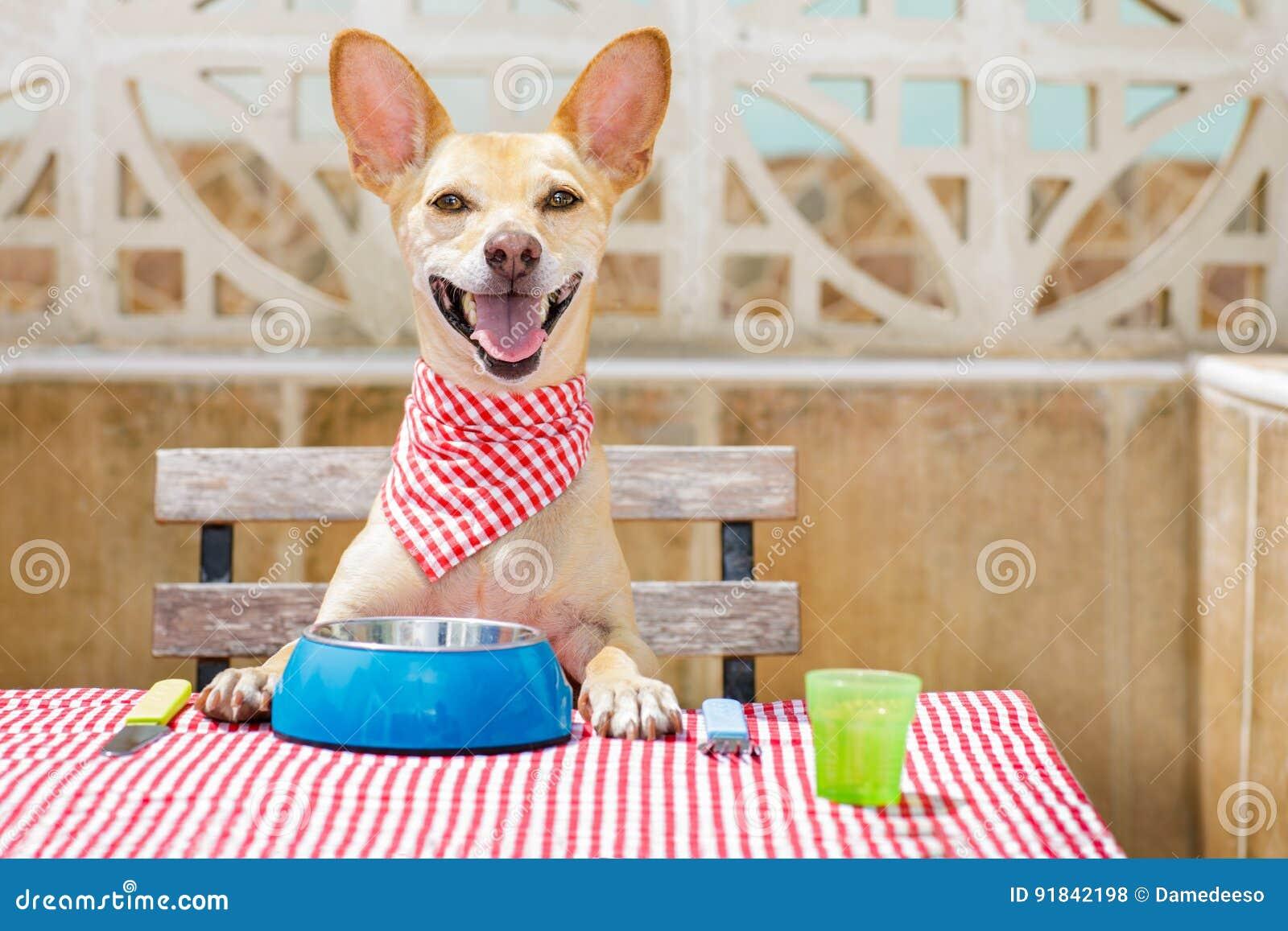 Dog Guarding Food Not Eating