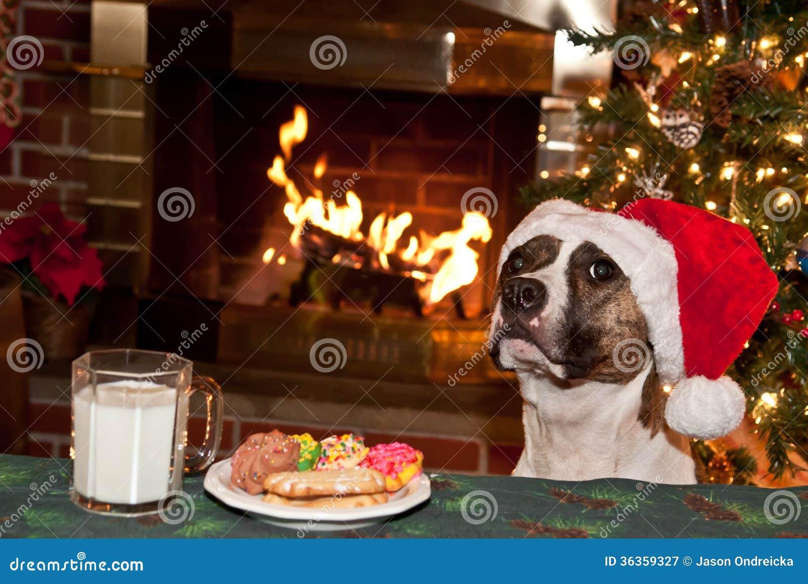 Dog Eats Santas Cookies. Royalty Free Stock Photography - Image ...