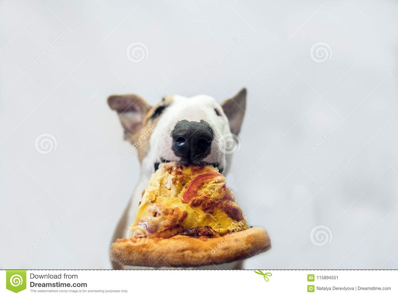 The dog eats a tasty juicy pizza and frowns enough.