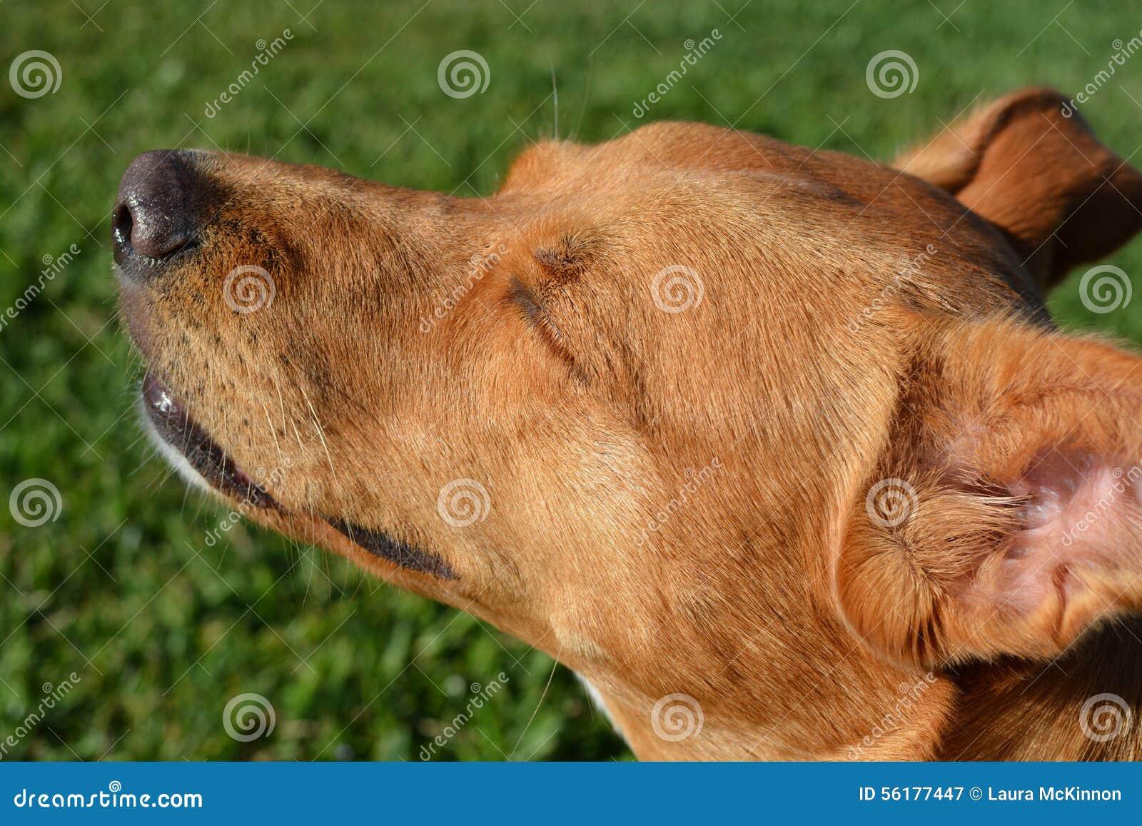 Dog enjoying the sunshine on her face