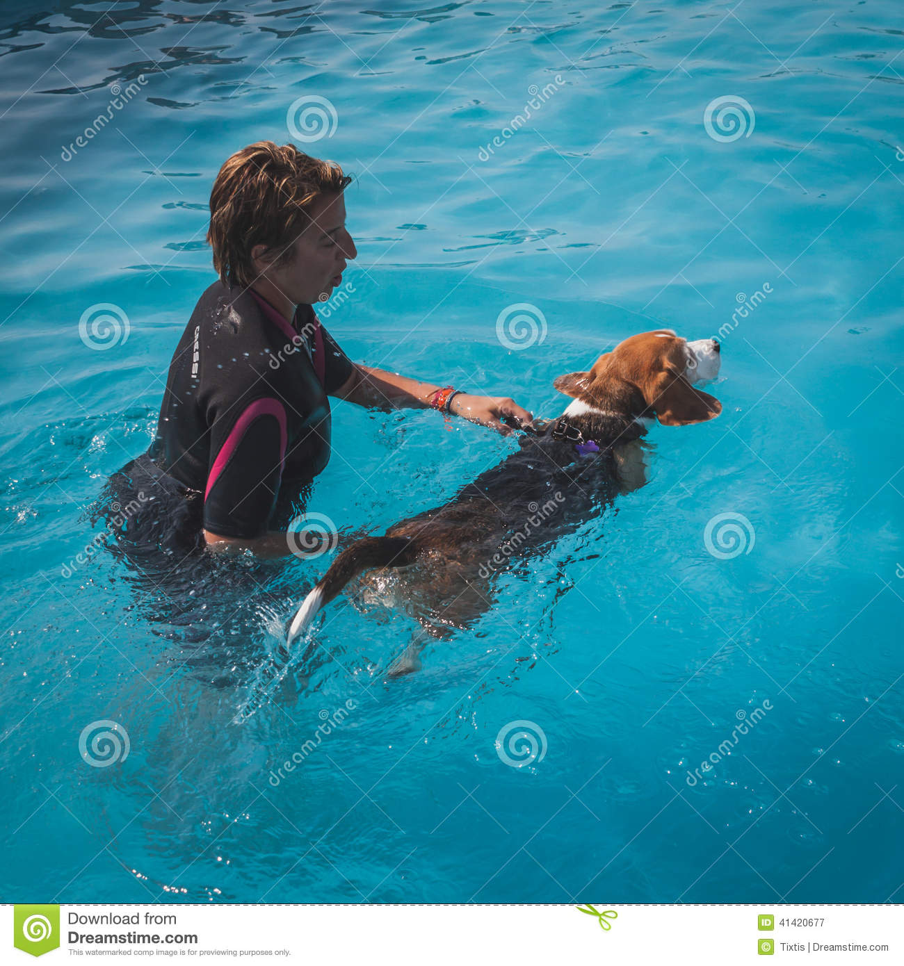 Water training dog editorial photo 21612267 for Swimming pool certification course