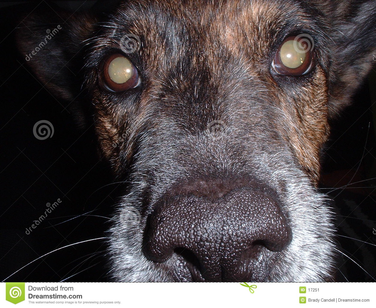 Dog face close-up
