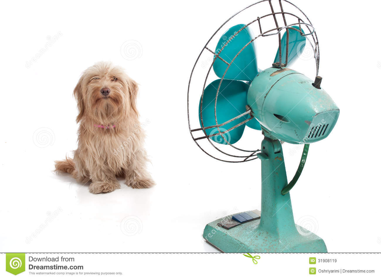 Dog With Fan : Dog with fan stock image of looking cute humor