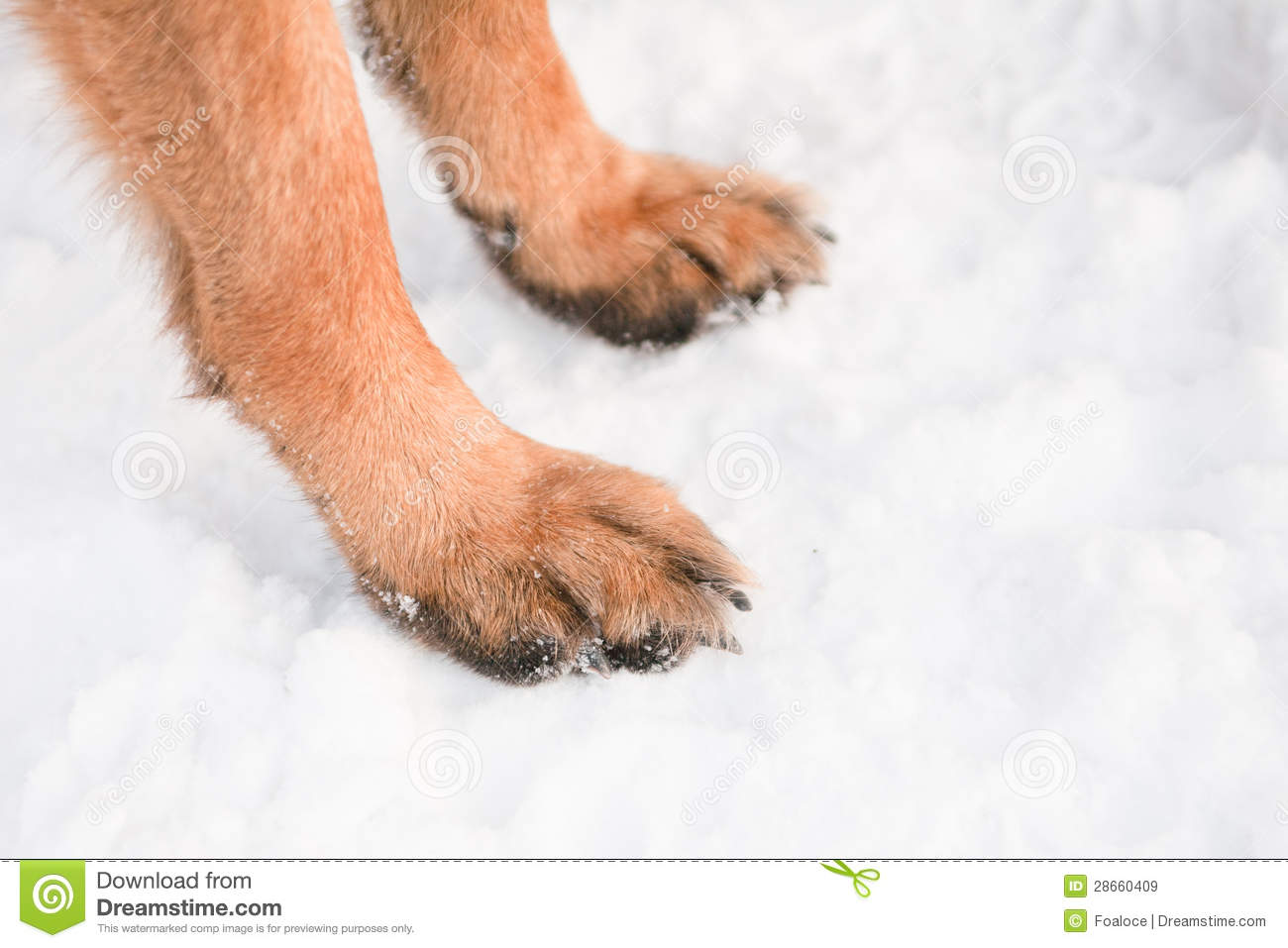 Dog Feet Royalty Free Stock Images - Image: 28660409