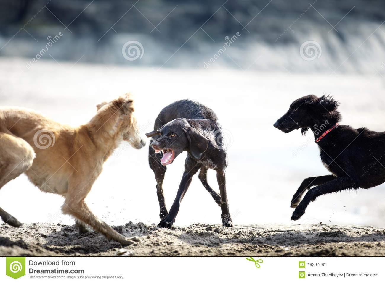 Dog Fighting Videos Free Download