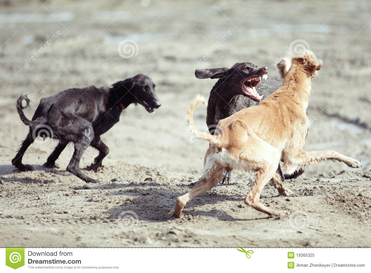 how to know if dogs are playing or fighting