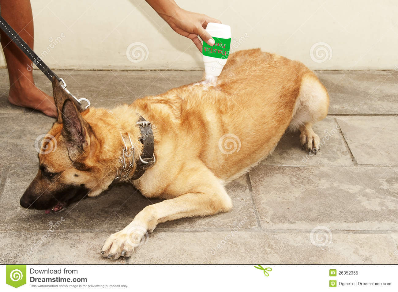 Dog Flea And Tick Powder Stock Image Image Of Furry