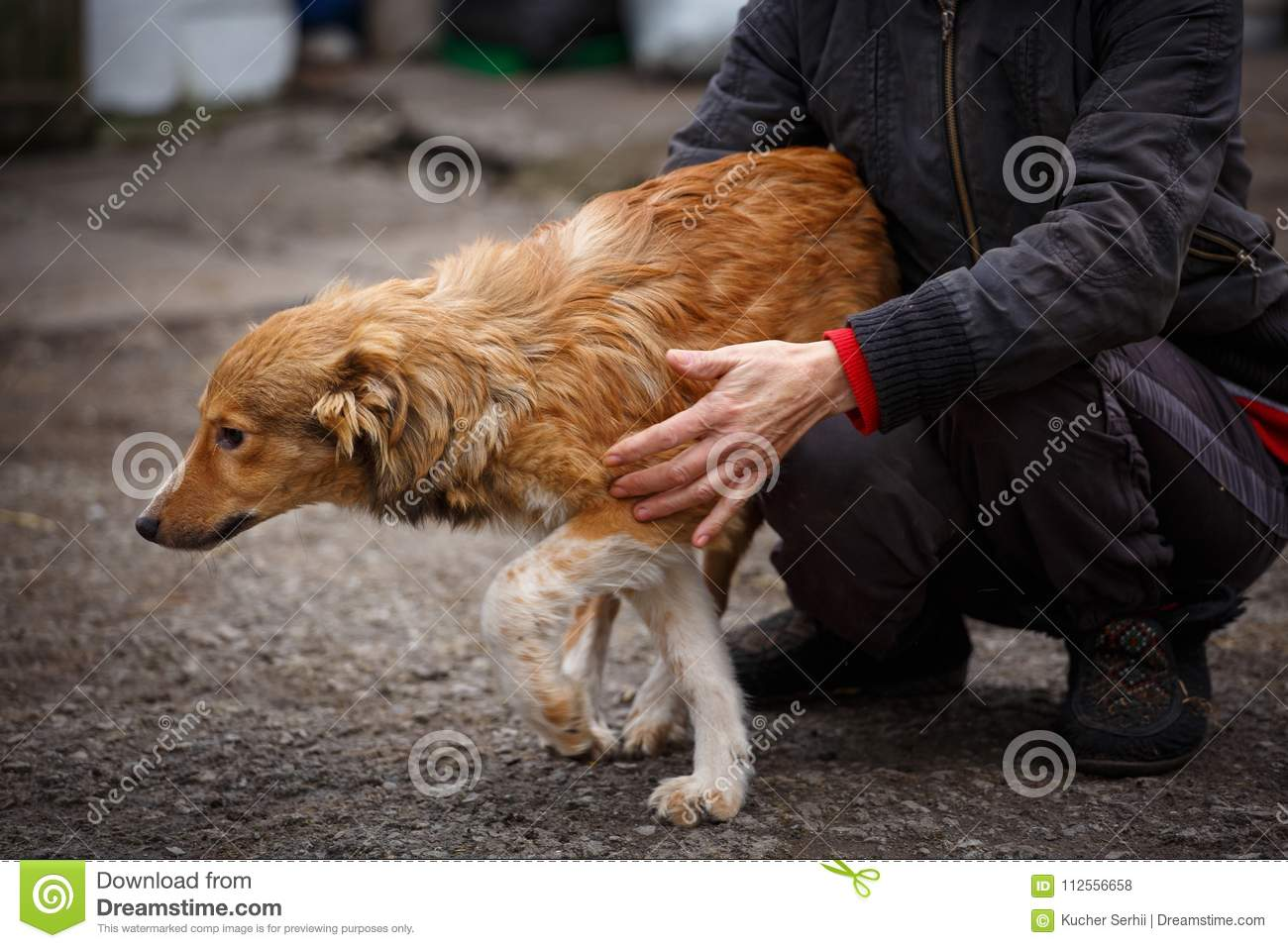 A Dog Is A Friend  A True Friend  Help For Stray Dogs  Stock