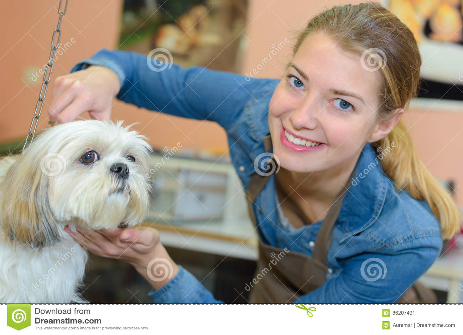 Dog getting hair cut in grooming salon