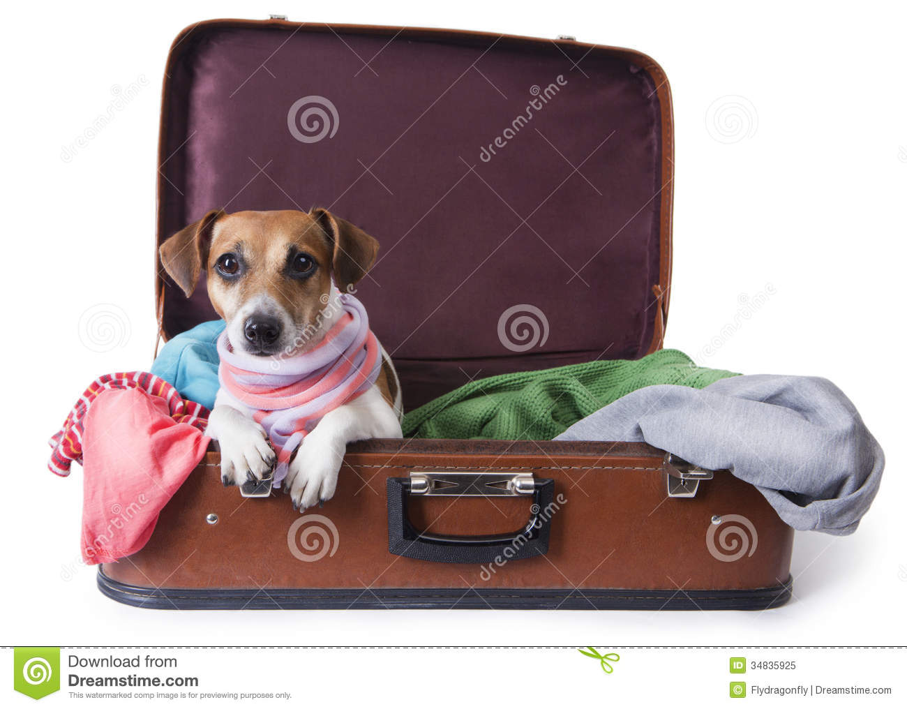 Dog Going On A Journey Royalty Free Stock Photo Image
