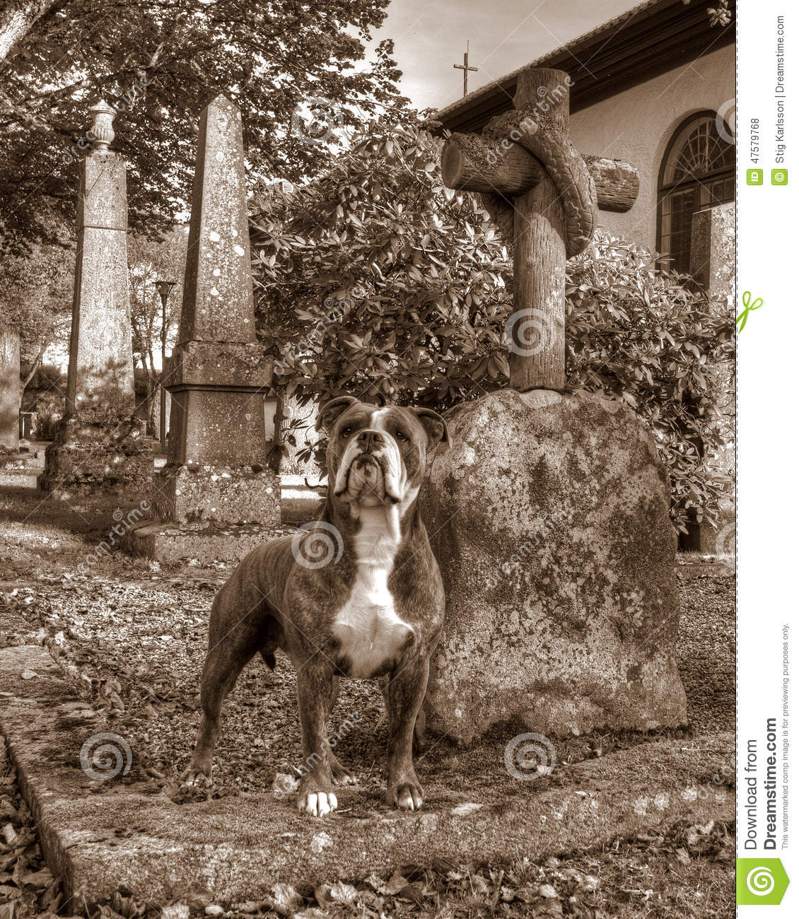 Where To Find Home For Bitting Dog
