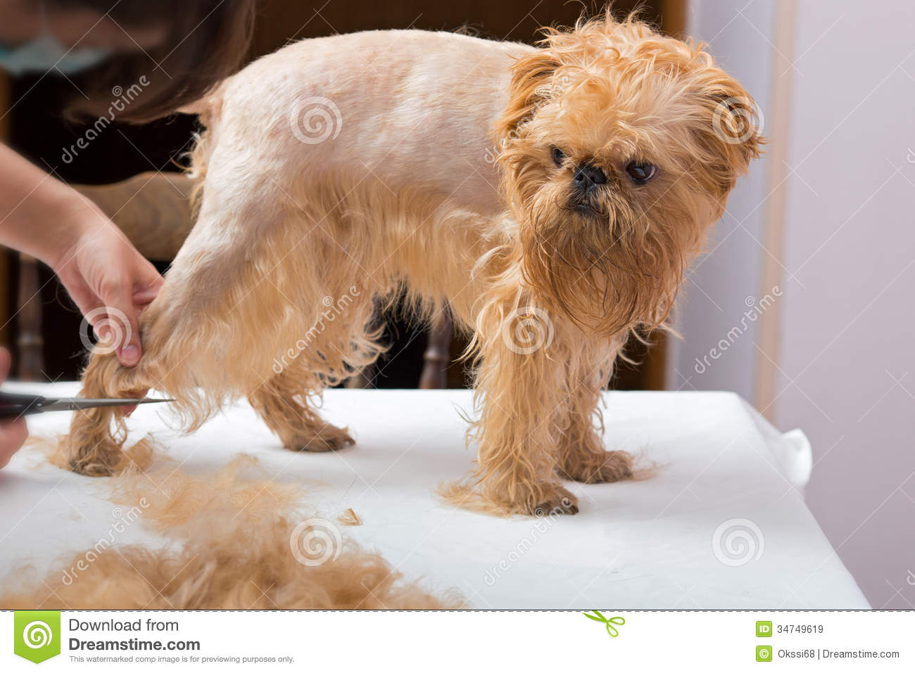 Dog Grooming Prices By Breed