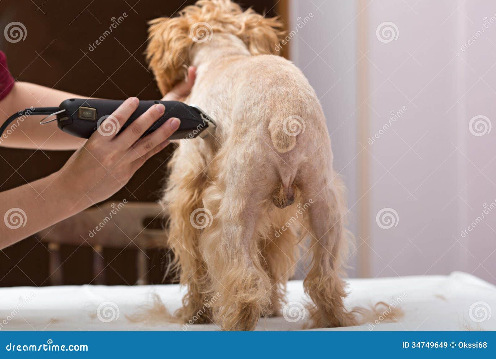 Dog Grooming Styles Haircuts
