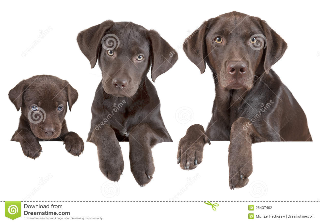 Puppies growth and development dog breeds picture - Gardening for pets ...