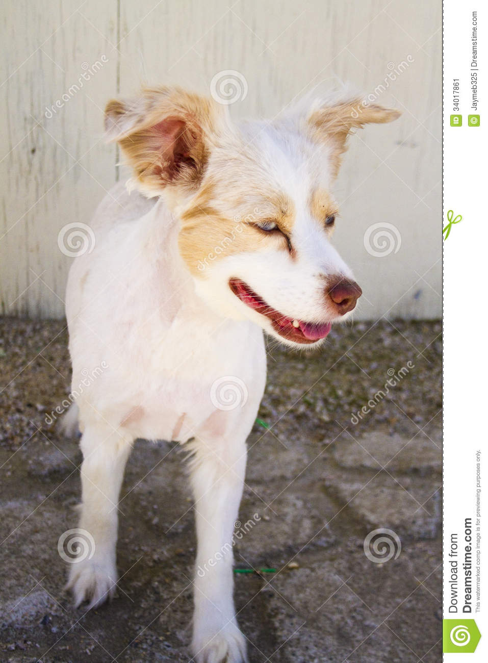 Dog Haircut Stock Image Image Of Dogs Shorne Outdoors 34017861