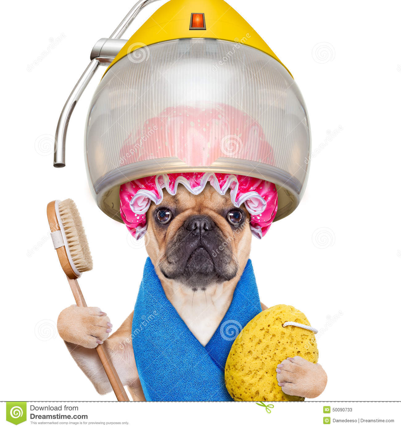 Dog At The Hairdressers Stock Photo Image 50090733