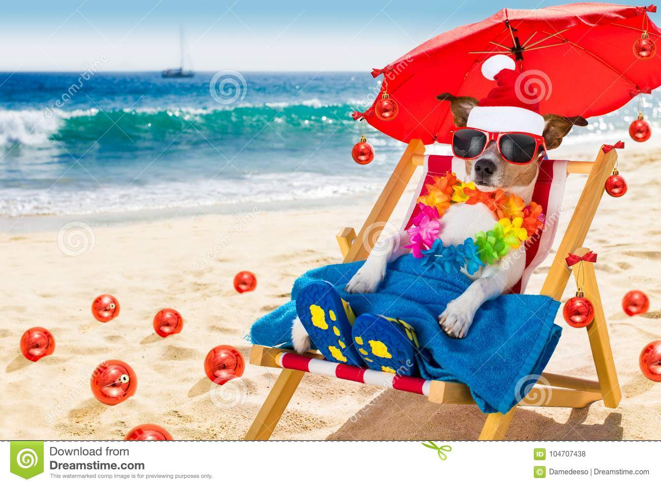 download dog in hammock as santa claus on christmas at the beach stock photo image - Christmas At The Beach