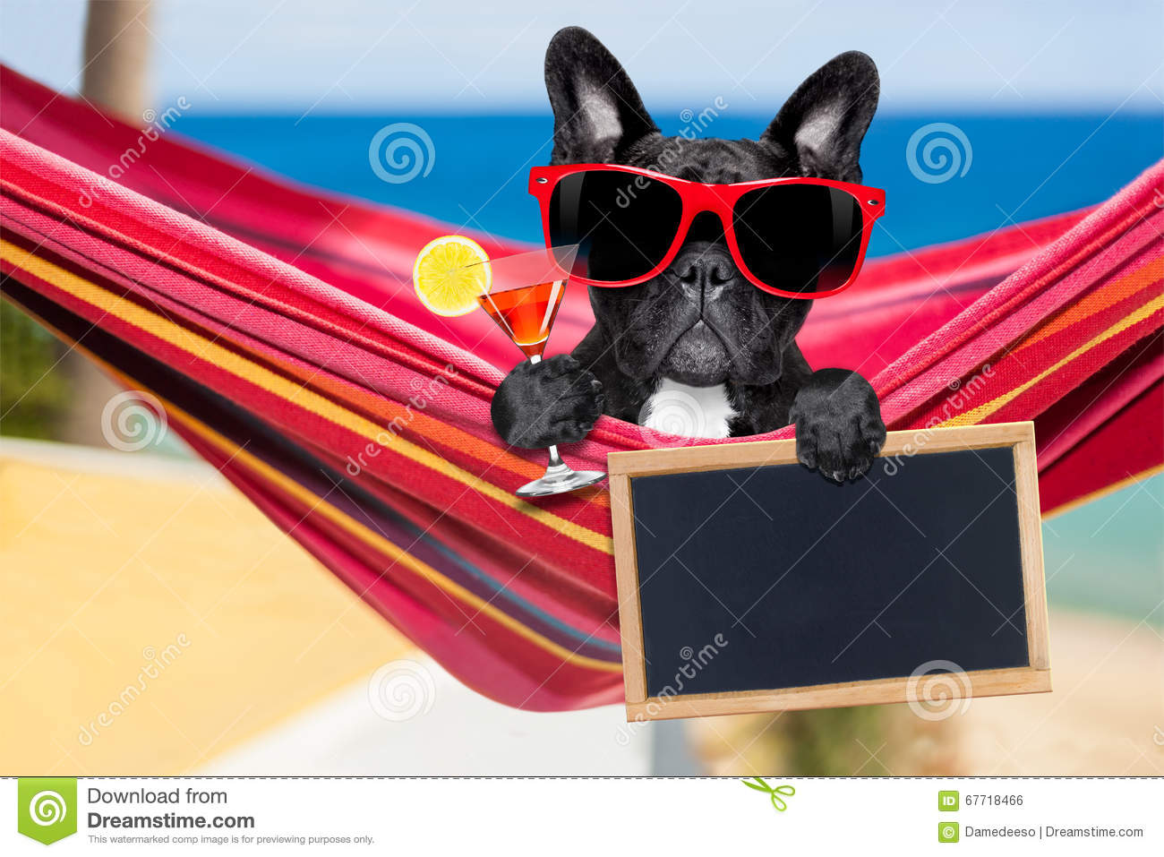Dog on hammock in summer Royalty Free Stock Image - Dog Hammock Stock Photos, Images, & Pictures - 349 Images