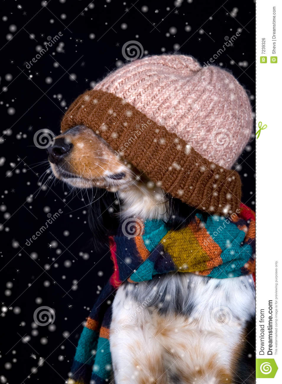 Dog With Hat In Snow Royalty Free Stock Image - Image: 7239326