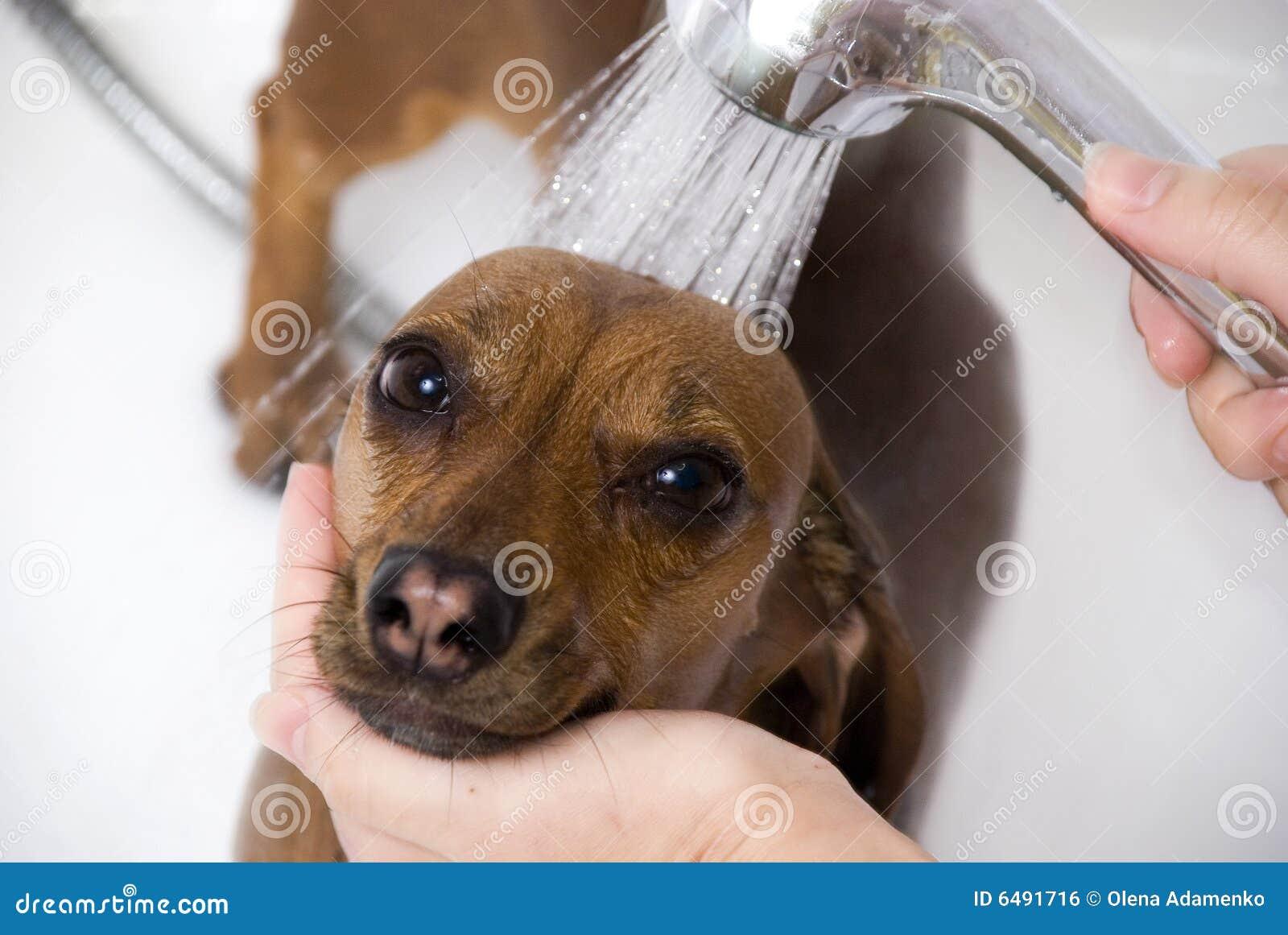 The dog have a bath