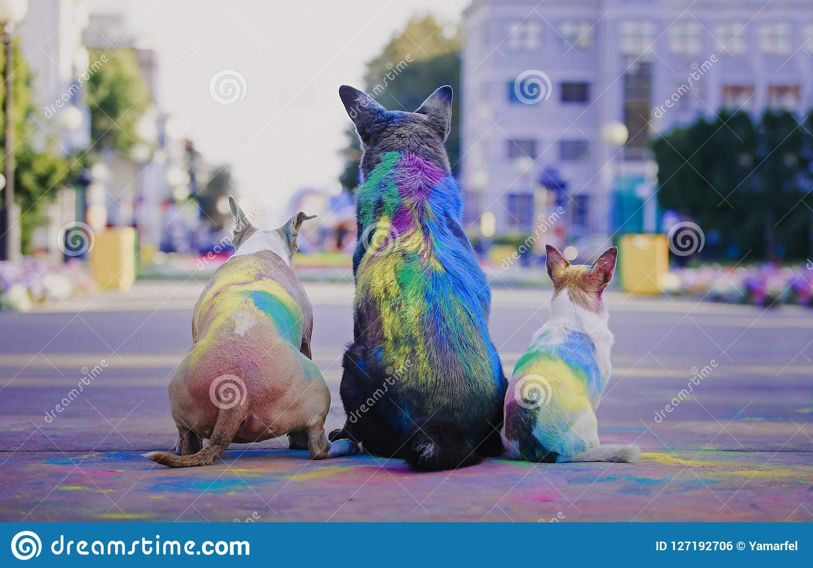 A dog having fun with paints of holi