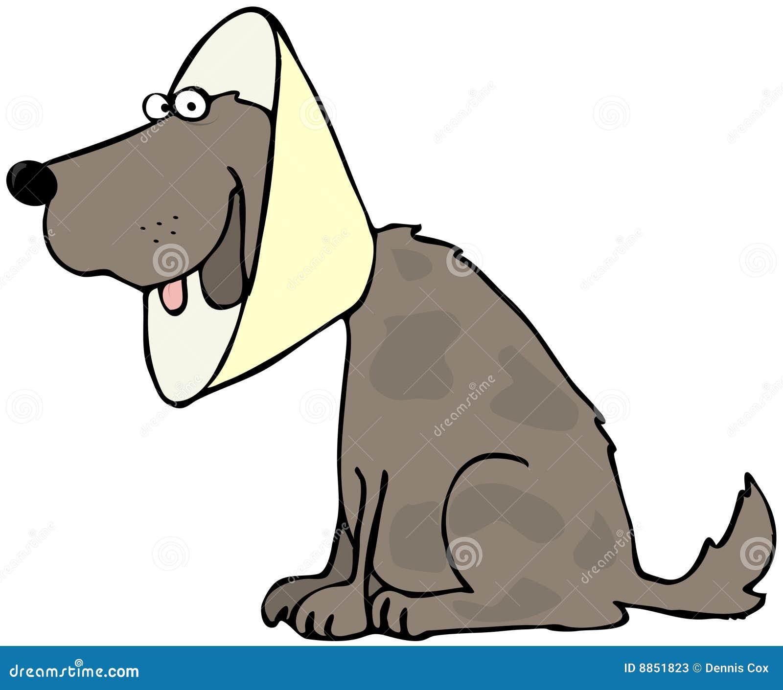 Dog With Head Gear Stock Photos Image 8851823
