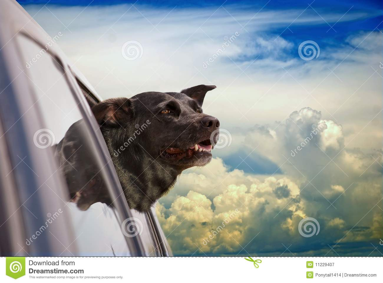 Happy dog going for a car ride in the clouds.