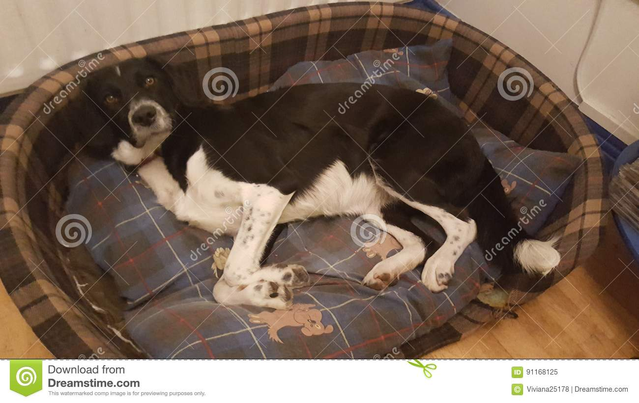 Dog in his bed