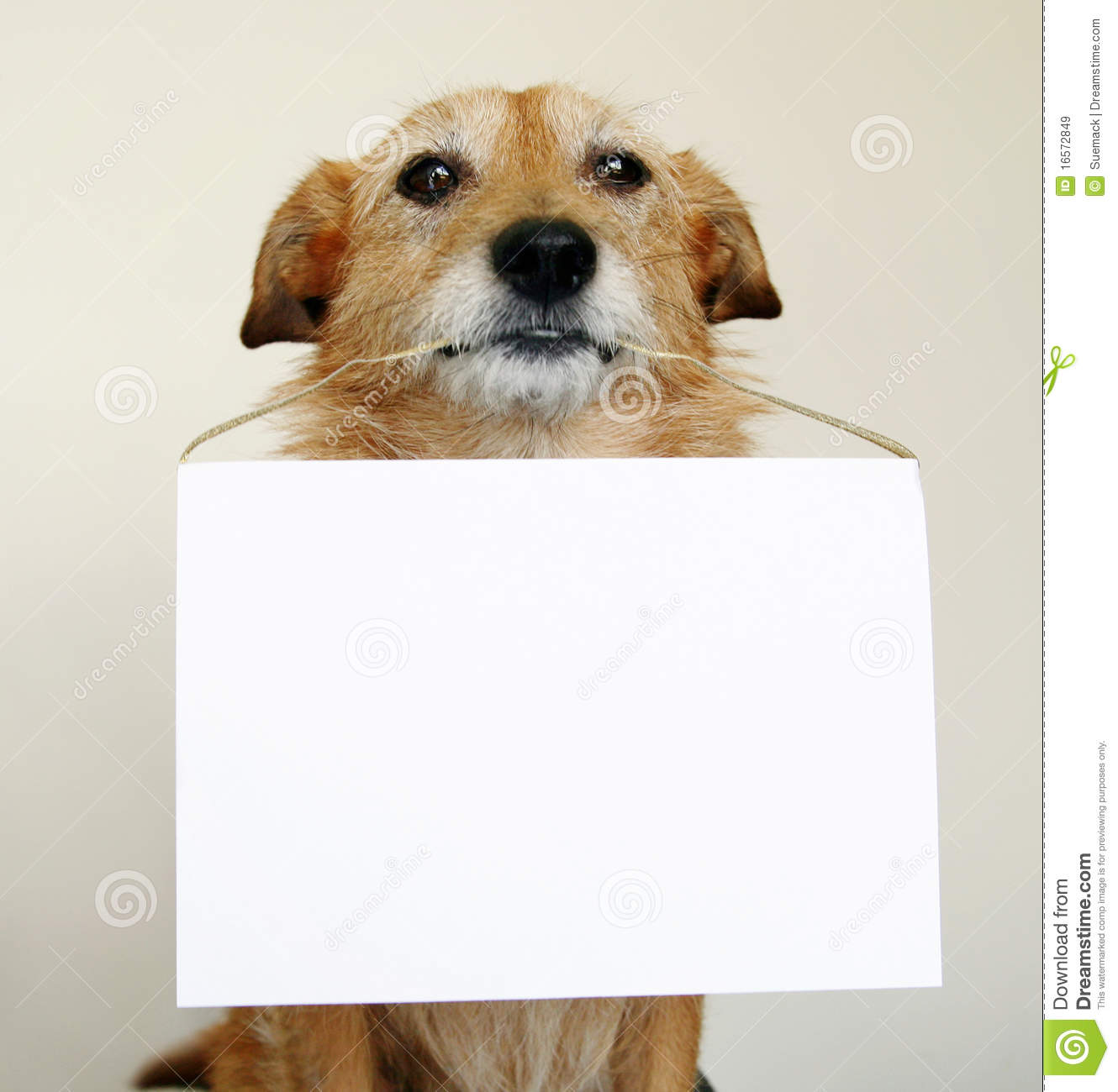 Dog holding a blank sign