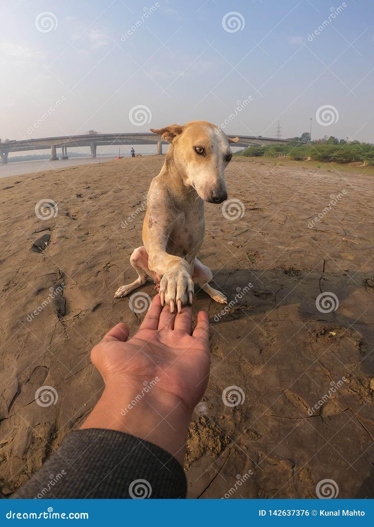 Dog holding men`s hand