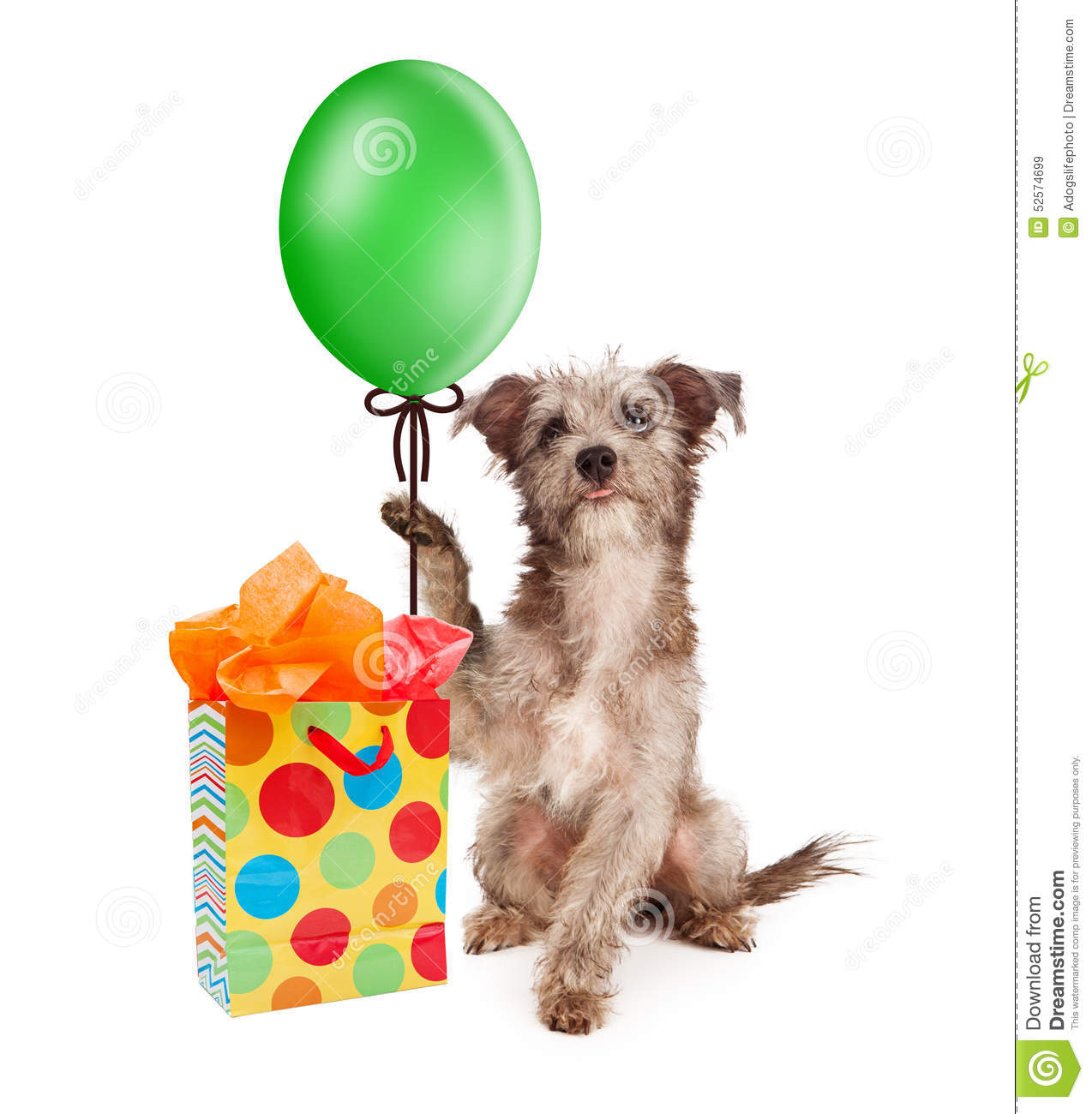 Dog Holding Party Balloon With Gift Stock Photo Image