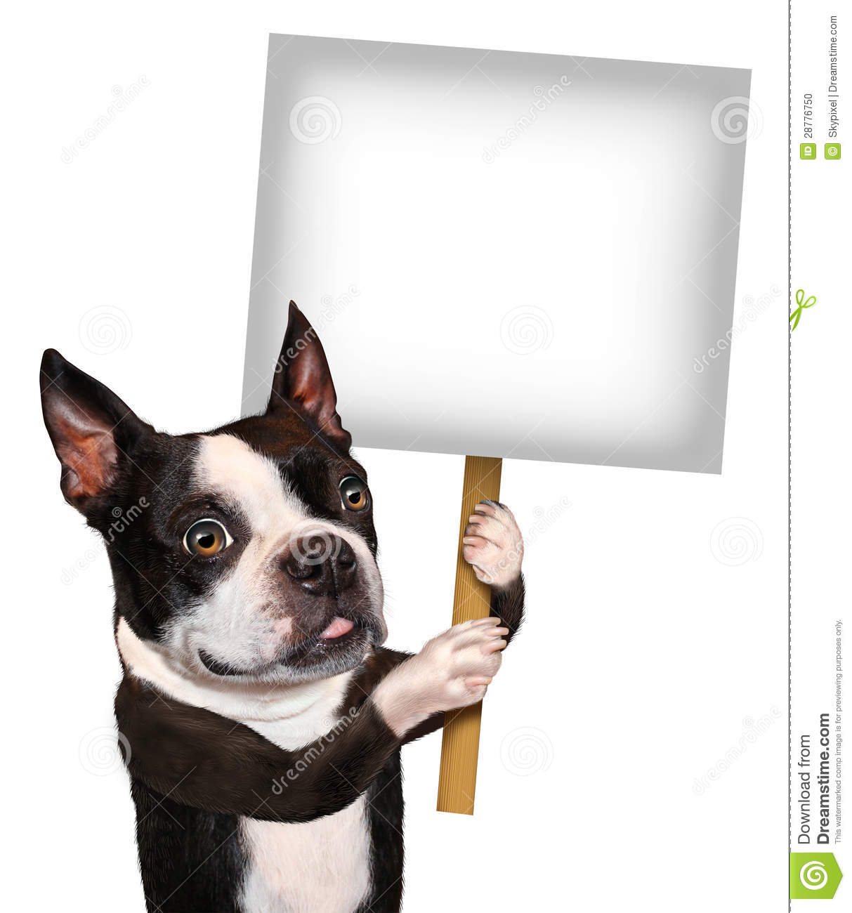 sign as a Boston Terrier with a smiling happy expression advertising ...