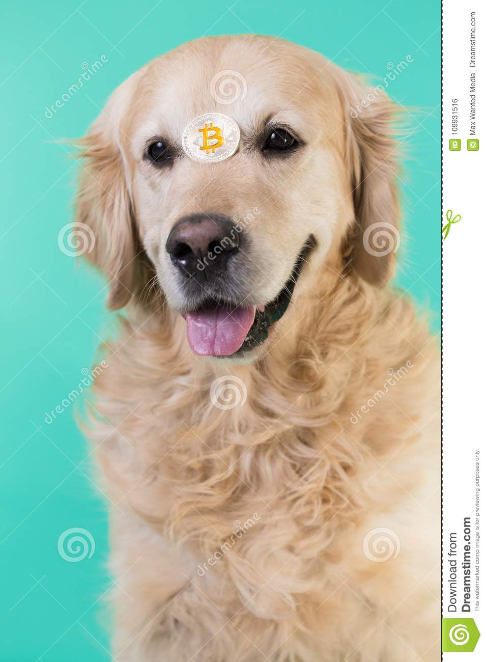 Bitcoins pictures of dogs cardiff vs nottingham bettingexpert football