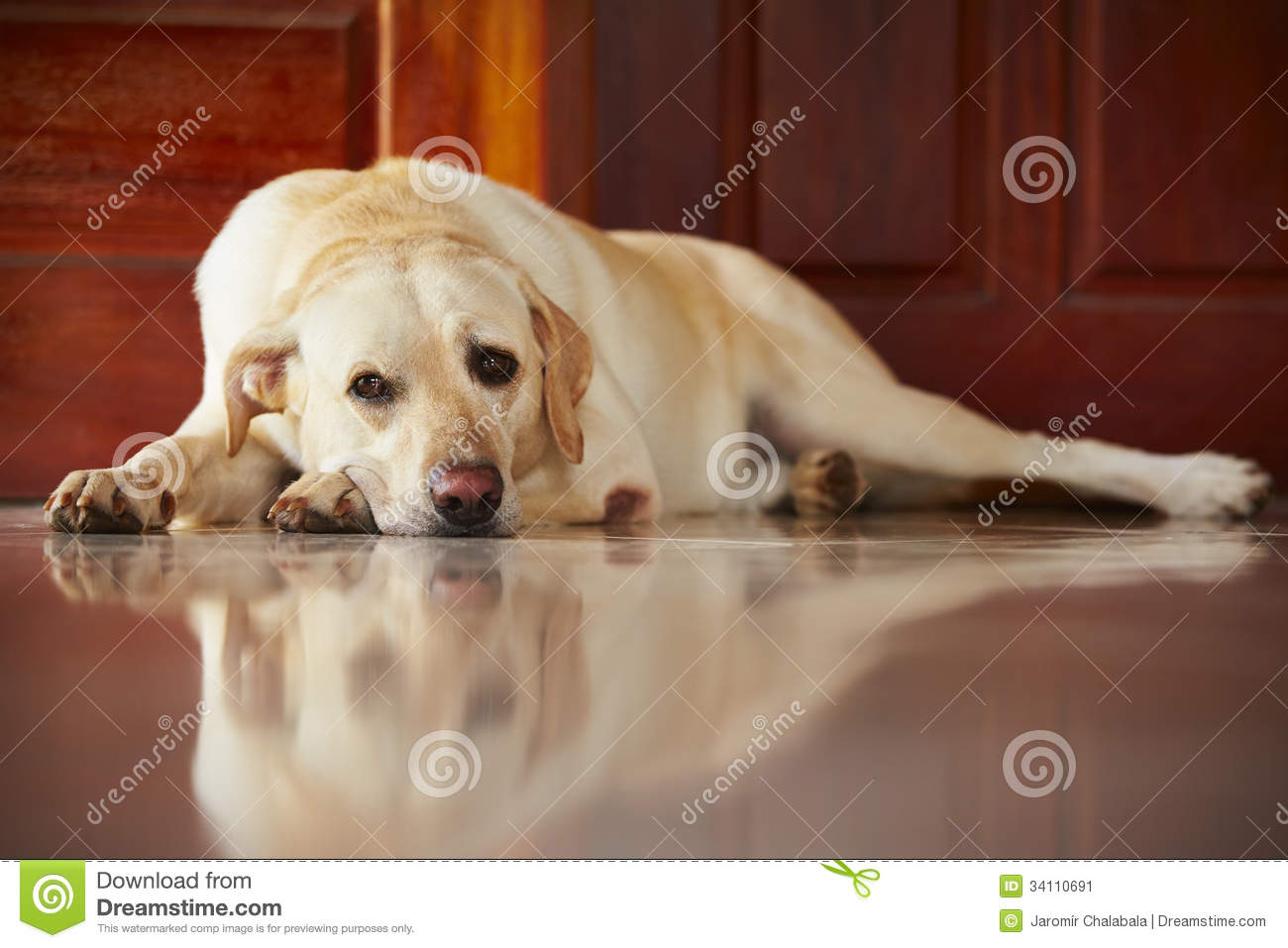 Dog at home stock image image 34110691 for Dog house for labrador retriever