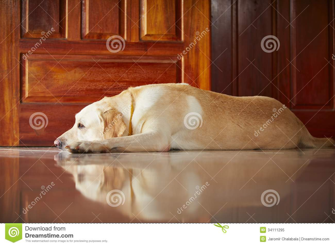 Dog at home royalty free stock photo image 34111295 for Dog house for labrador retriever