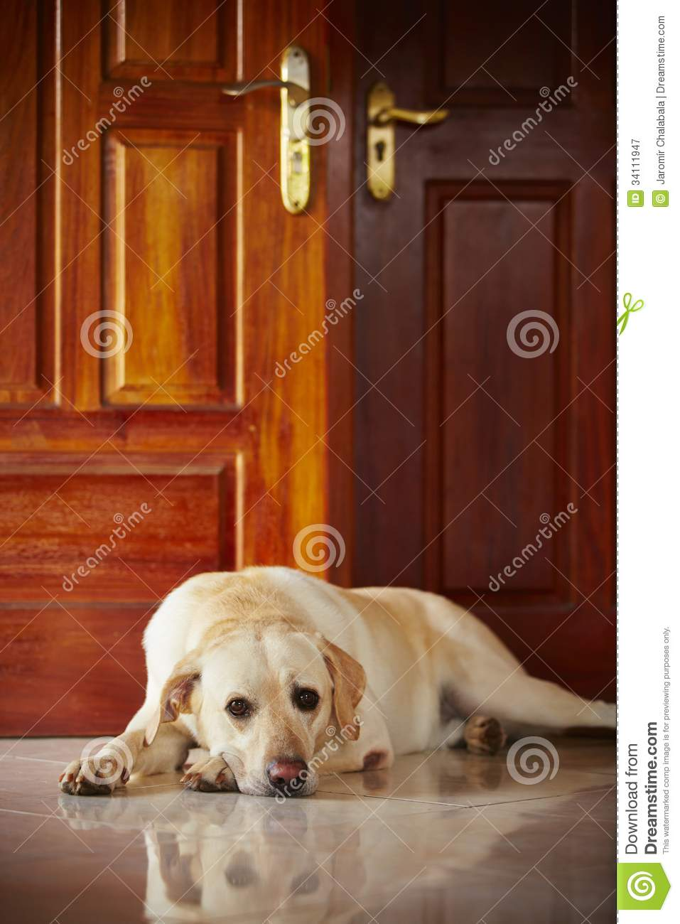 Dog at home royalty free stock photography image 34111947 for Dog house for labrador retriever