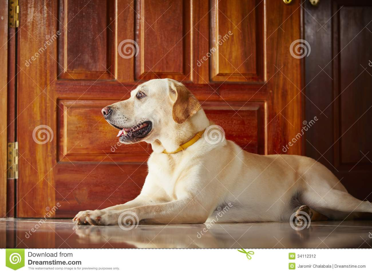 Dog at home stock photography image 34112312 for Dog house for labrador retriever